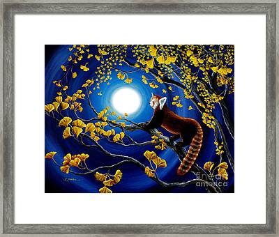 Red Panda In Golden Gingko Tree Framed Print by Laura Iverson