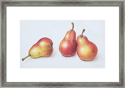 Red Pears Framed Print by Margaret Ann Eden