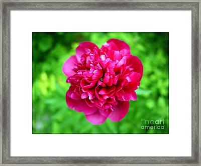 Red Peony Flower Framed Print by Edward Fielding