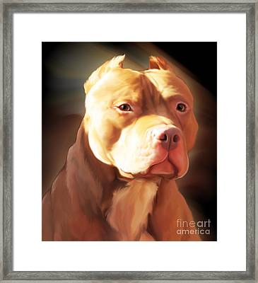 Red Pit Bull By Spano Framed Print by Michael Spano