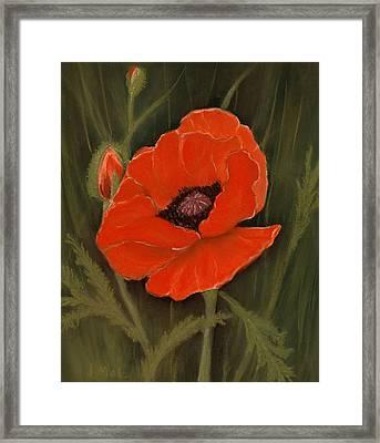 Red Poppy Framed Print by Anastasiya Malakhova
