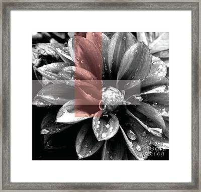 Red Rain Blossom Framed Print by Jamie Lynn