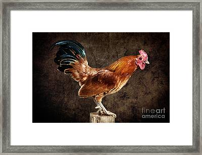 Red Rooster On Fence Post Framed Print by Cindy Singleton