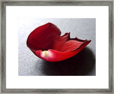 Red Rose Flower Petals Abstract I - Closeup Flower Photograph Framed Print by Artecco Fine Art Photography