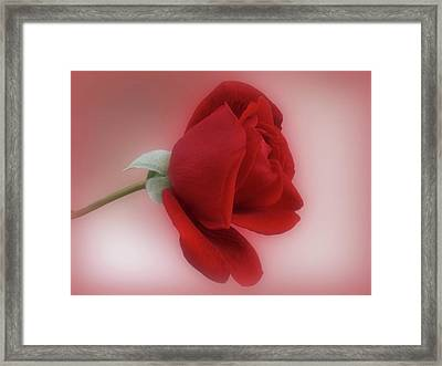 Red Rose For You Framed Print by Sandy Keeton