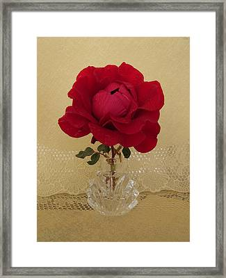 red rose III Framed Print by Zina Stromberg