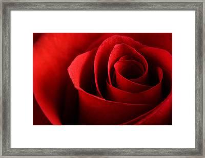 Red Rose Macro Framed Print by Johan Swanepoel