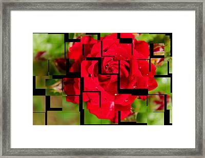 Red Rose Puzzle Framed Print by Julia Fine Art And Photography
