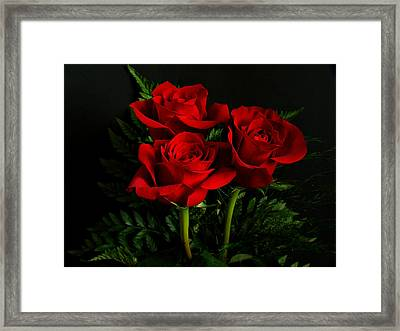Red Roses Framed Print by Sandy Keeton