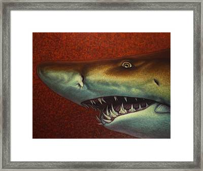 Red Sea Shark Framed Print by James W Johnson
