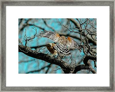 Red Shouldered Rondezvous Framed Print by Robert Frederick