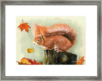 Red Squirrel In Autumn Framed Print by Sarah Batalka