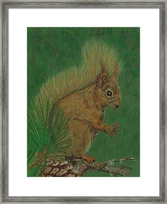 Red Squirrel Framed Print by Stephanie Grant