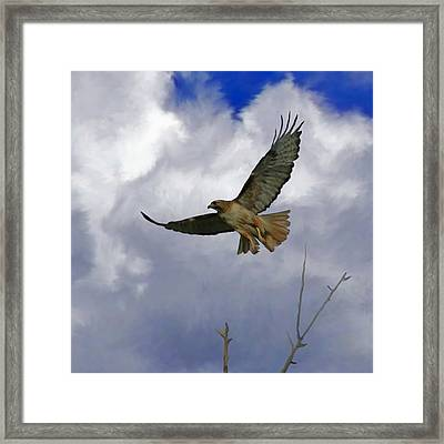 Red Tail Hawk Digital Freehand Painting 1 Framed Print by Ernie Echols