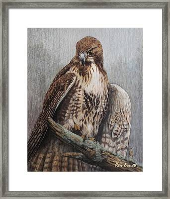 Red Tail Hawk Framed Print by Ken Everett
