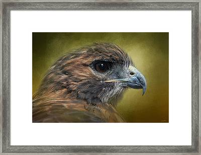 Red Tailed Hawk At Reelfoot Framed Print by Jai Johnson