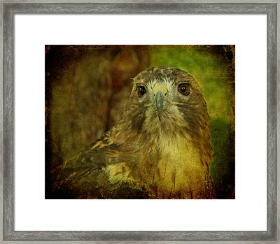 Red-tailed Hawk II Framed Print by Sandy Keeton