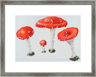Red Toadstools Fly Agaric  Framed Print by Sally Crosthwaite