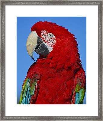 Red Framed Print by Tony Beck