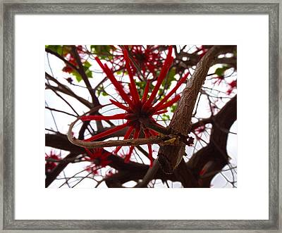 Red Tree Spiders  Framed Print by Kenneth James