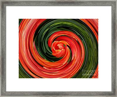 Red Tulip Framed Print by Hanza Turgul