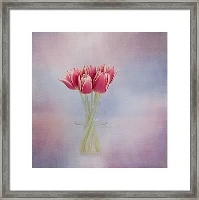 Red Tulip Still Life Framed Print by Kim Hojnacki