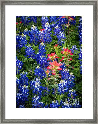 Red White And Blue Framed Print by Inge Johnsson