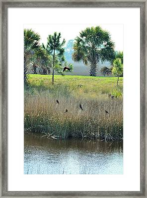 Red Winged Blackbirds Framed Print by Jan Amiss Photography