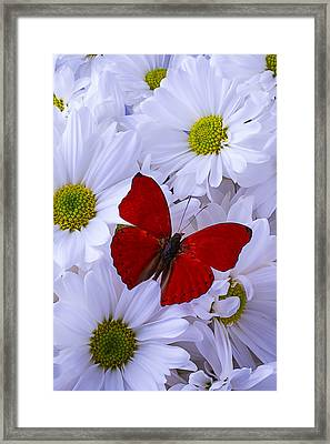 Red Wings On White Daises Framed Print by Garry Gay