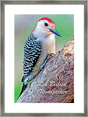 Framed Print featuring the photograph Redbellied Woodpecker Poster Image by A Gurmankin