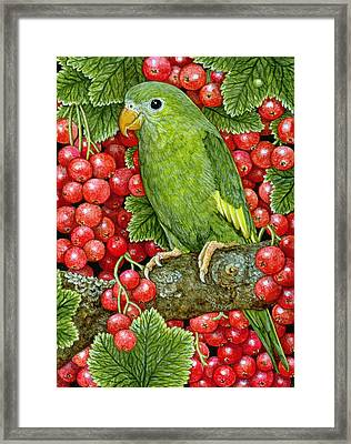Redcurrant Parakeet Framed Print by Ditz