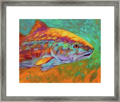 Redfish Portrait Framed Print by Savlen Art