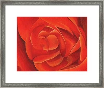 Redrose14-1 Framed Print by William Killen