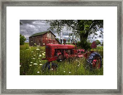 Reds In The Pasture Framed Print by Debra and Dave Vanderlaan
