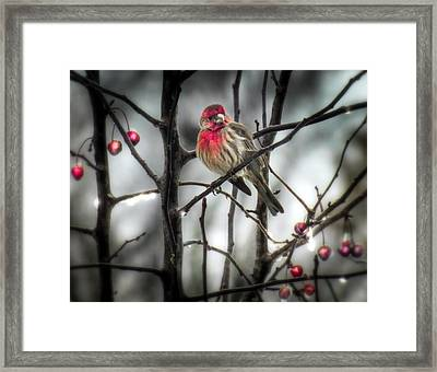 Reds Of Winter Framed Print by Karen Wiles