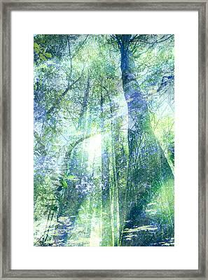 Redwood Dreams Framed Print by Nicole Swanger