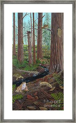 Redwood Forest Framed Print by Carlyn Iverson