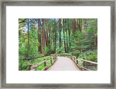 Redwood Forest Of Muir Woods National Monument In San Francisco. Framed Print by Jamie Pham
