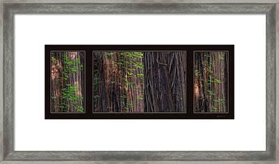 Redwood Texture Triptych Framed Print by Leland D Howard