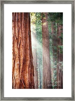 Redwoods In Yosemite Framed Print by Jane Rix