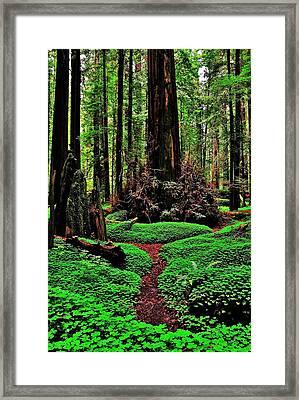 Redwoods Wonderland Framed Print by Benjamin Yeager