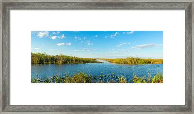 Reed At Riverside, Big Cypress Swamp Framed Print by Panoramic Images