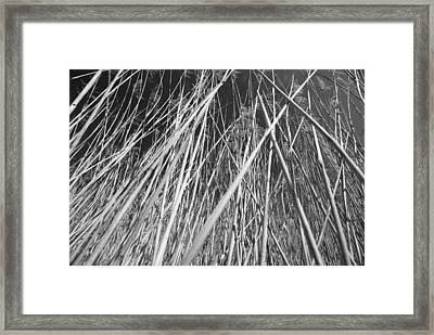 Reed Framed Print by Chevy Fleet
