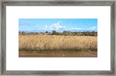 Reed Marsh Framed Print by Tom Gowanlock