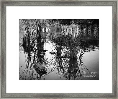 Reeds Framed Print by Arne Hansen