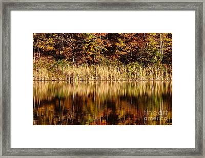 Refections In Water Framed Print by Dan Friend