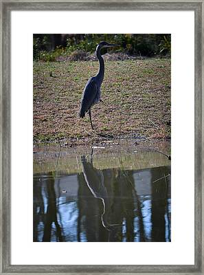 Reflected Heron Framed Print by Mary Zeman