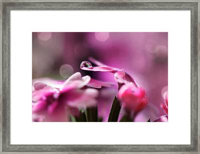 Reflecting On Pink Framed Print by Lisa Knechtel