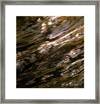 Reflections Framed Print by C Ray  Roth