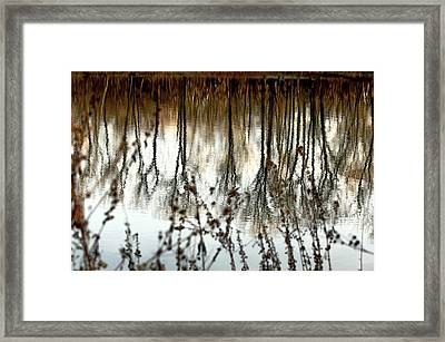 Reflections Framed Print by Joanne Beebe